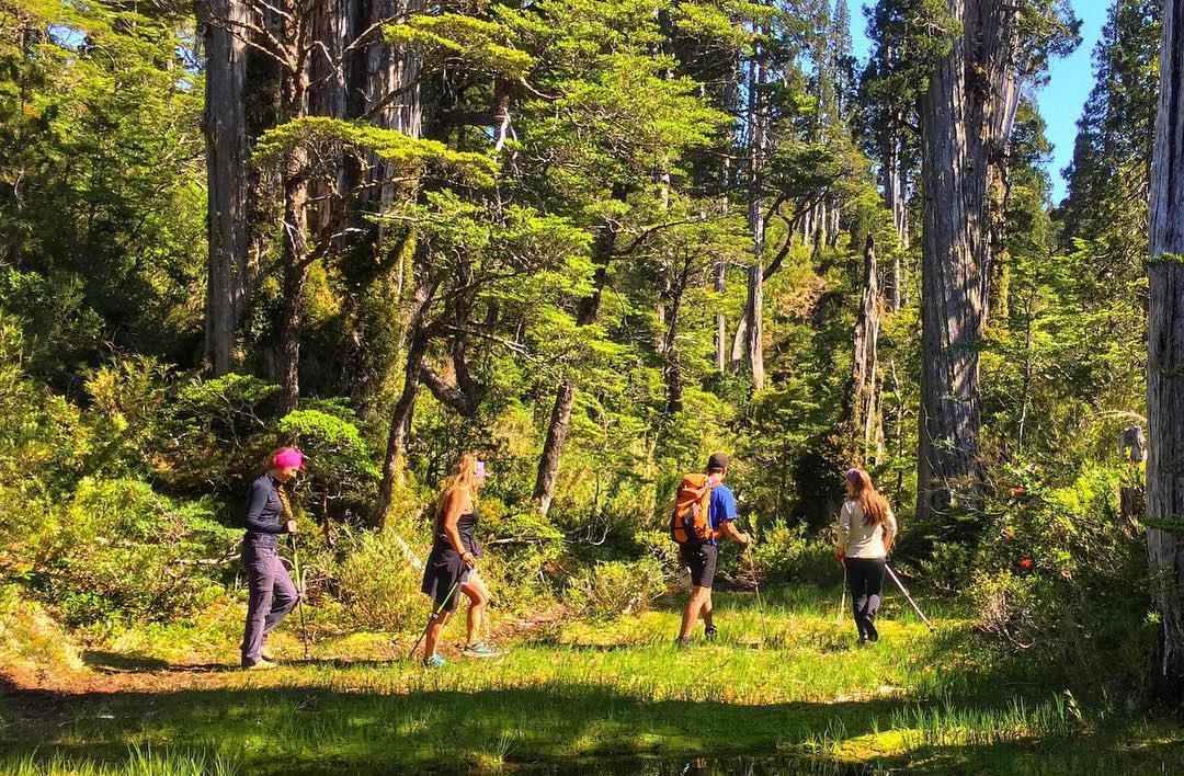 Trekkeros caminando por el bosque