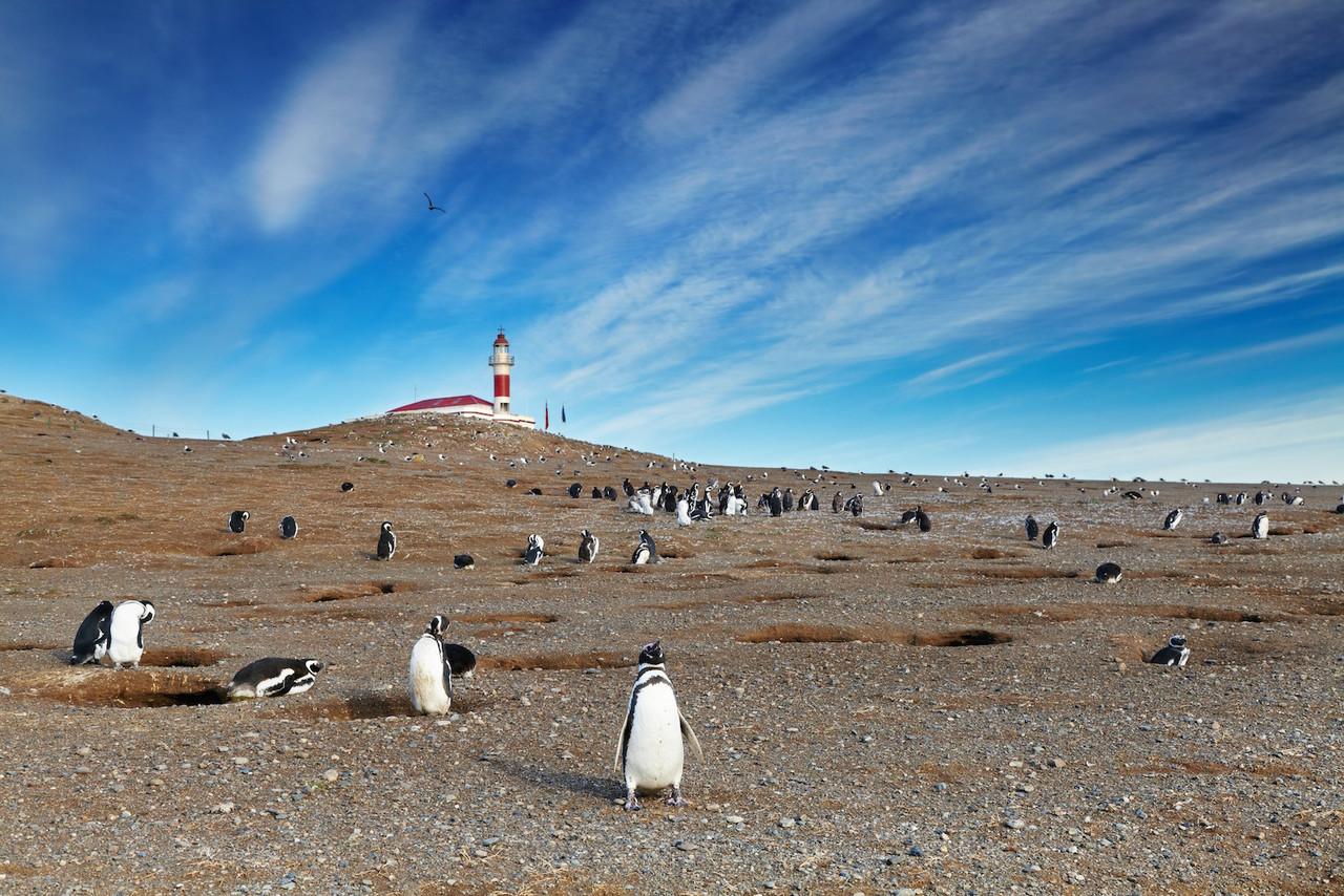 Pingüinos frente a faro y cielo azul