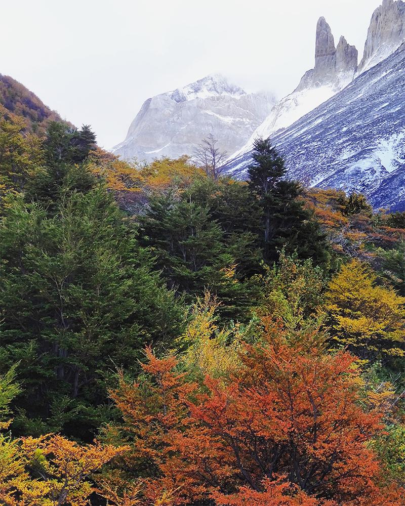 Arboles otoñales y montañas
