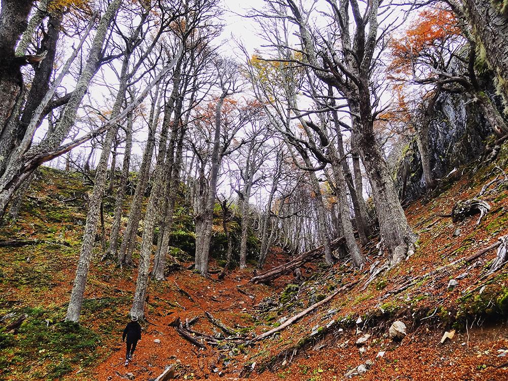 Bosque gigante