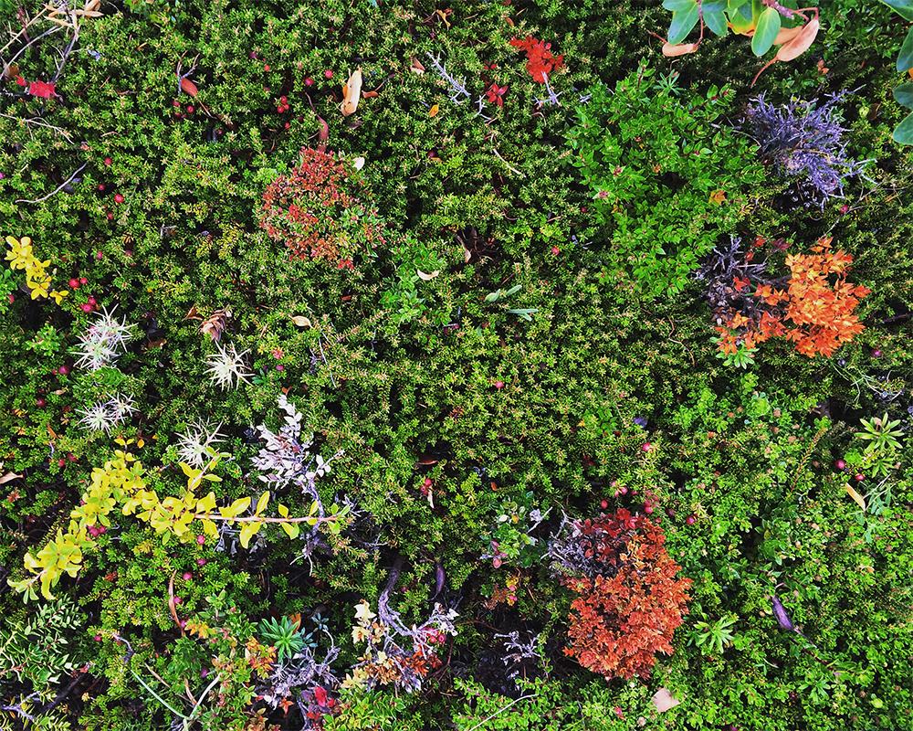 Arbusto de colores