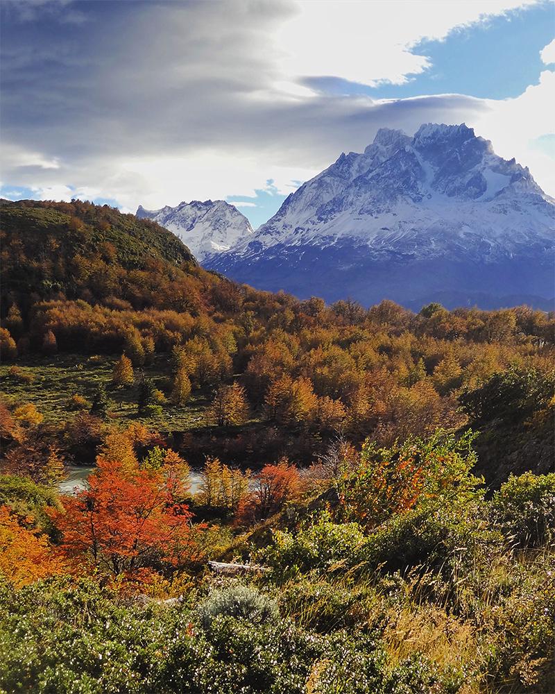 Bosque patagónico y montaña nevada de fondo en Torres del Paine