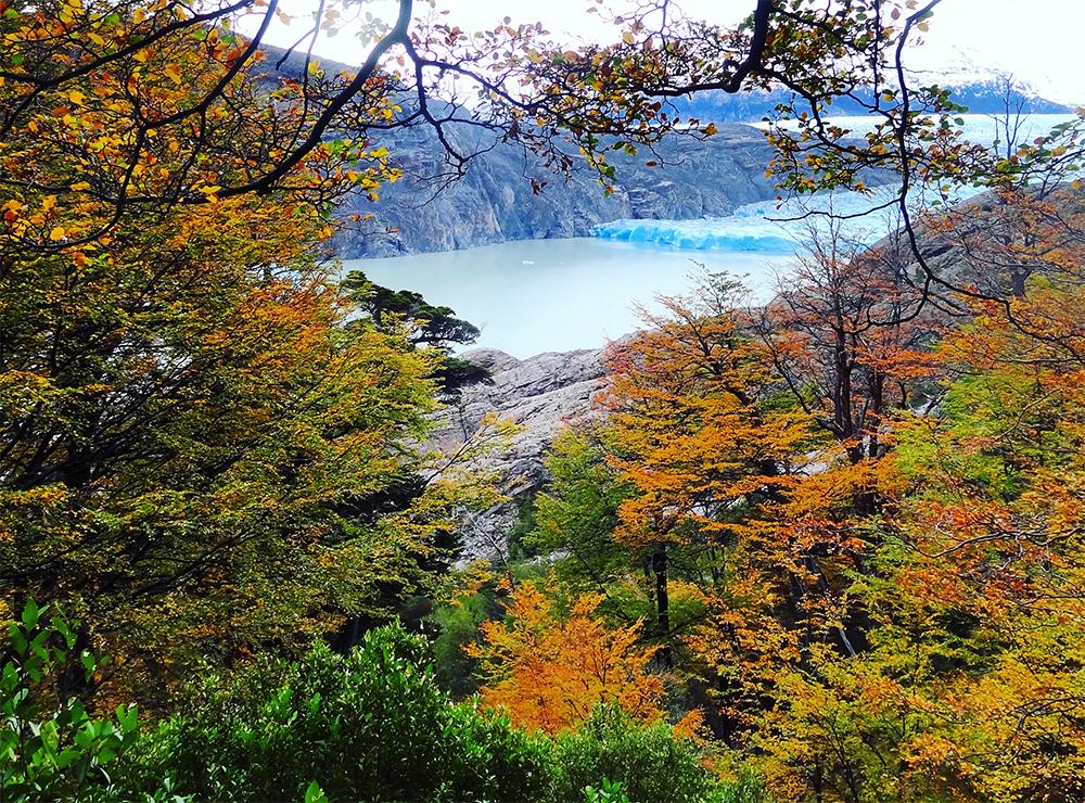 Glaciar Grey entre los arboles de otoño