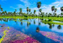 pantano en argentina