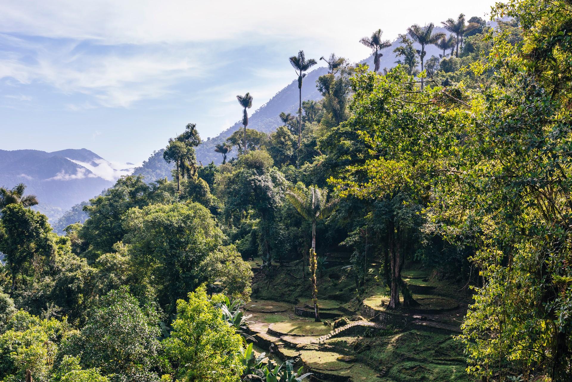 Restos arqueológicos en medio de la selva tropical en Ciudad Perdida