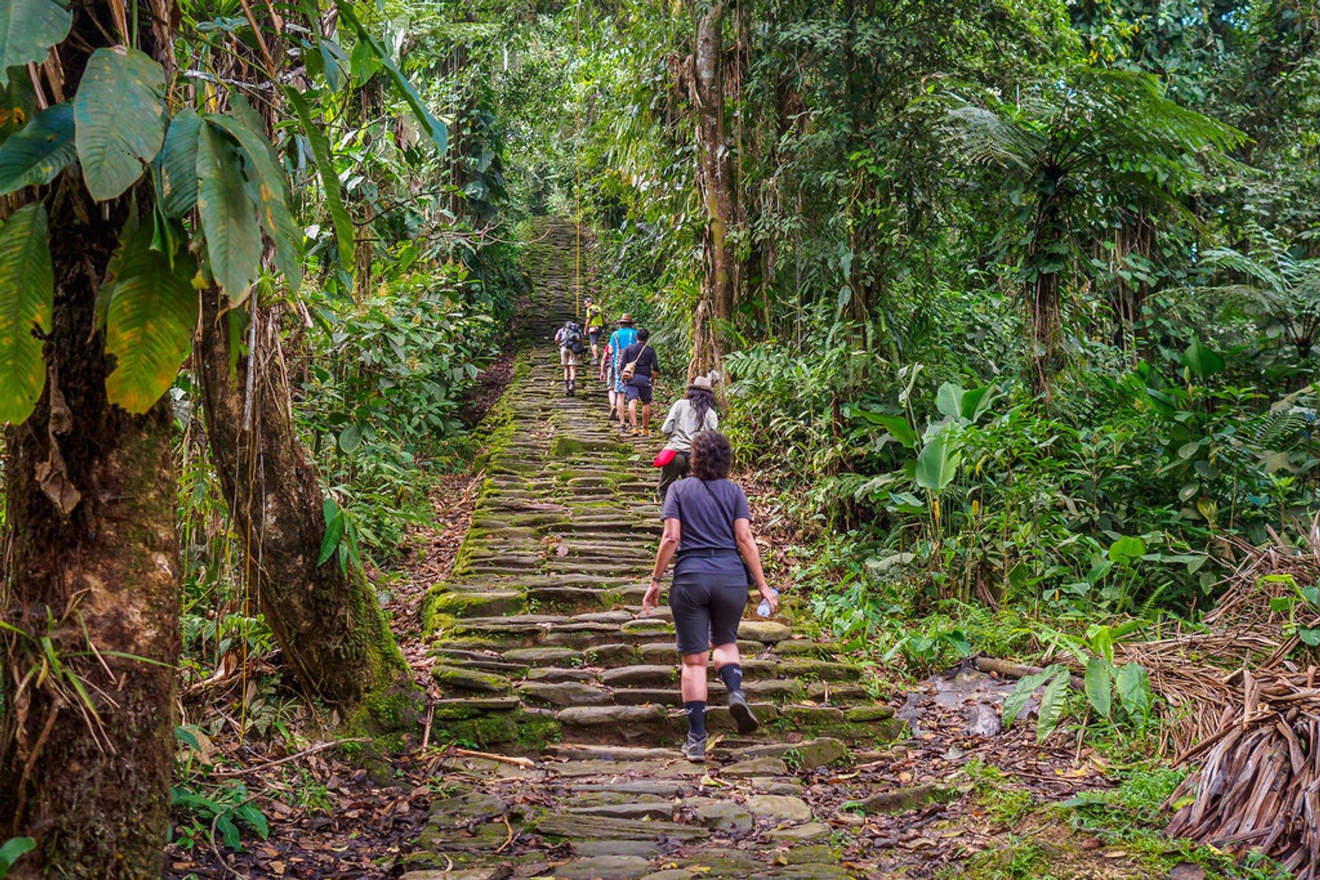Viajeros suben escaleras en medio de la selva hacia Ciudad Perdida
