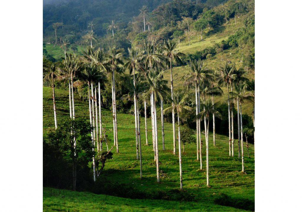 Bosque de palmeras en la selva