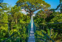 Puente colgante en medio de la selva en puerto maldonado