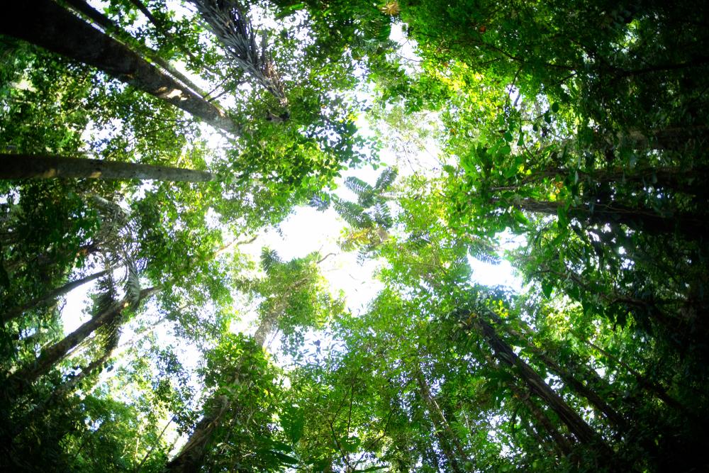 Vista hacia la copa de los árboles en la selva peruana