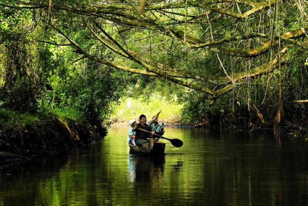 VIajeros remando en kayak por manglares de san pedro