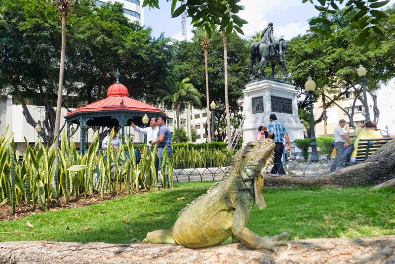 Iguana en una plaza de Guayaquil en Ecuador