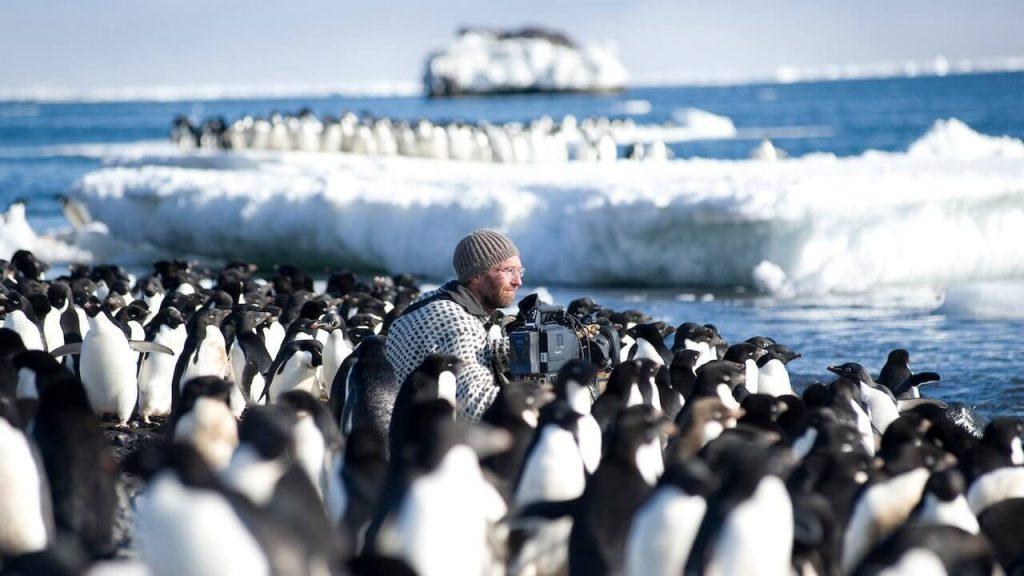 Hombre grabando en medio de colonia de pinguinos