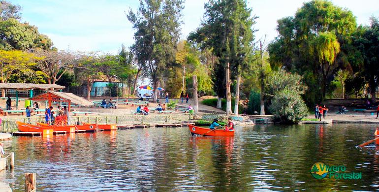 Laguna y gente dentro de unvivero forestal en chimbote