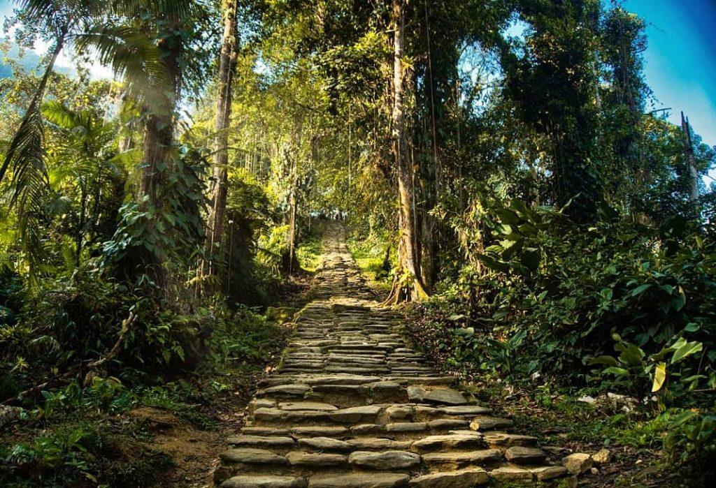 Escalones en medio de la selva