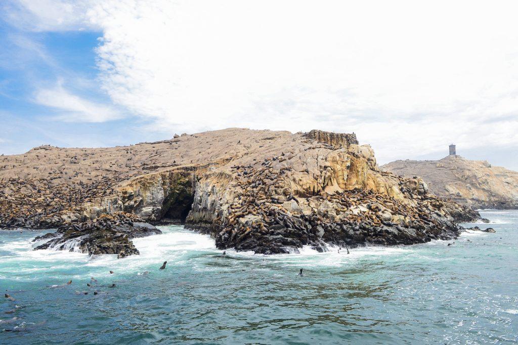 Isla con lobos marinos en lima