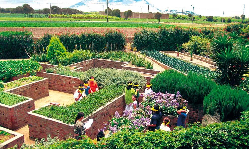 Personas en medio de un jardín