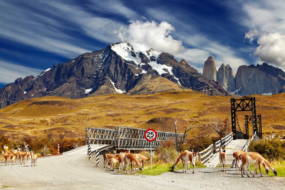Guanacos frente a paisaje montañoso en Chile