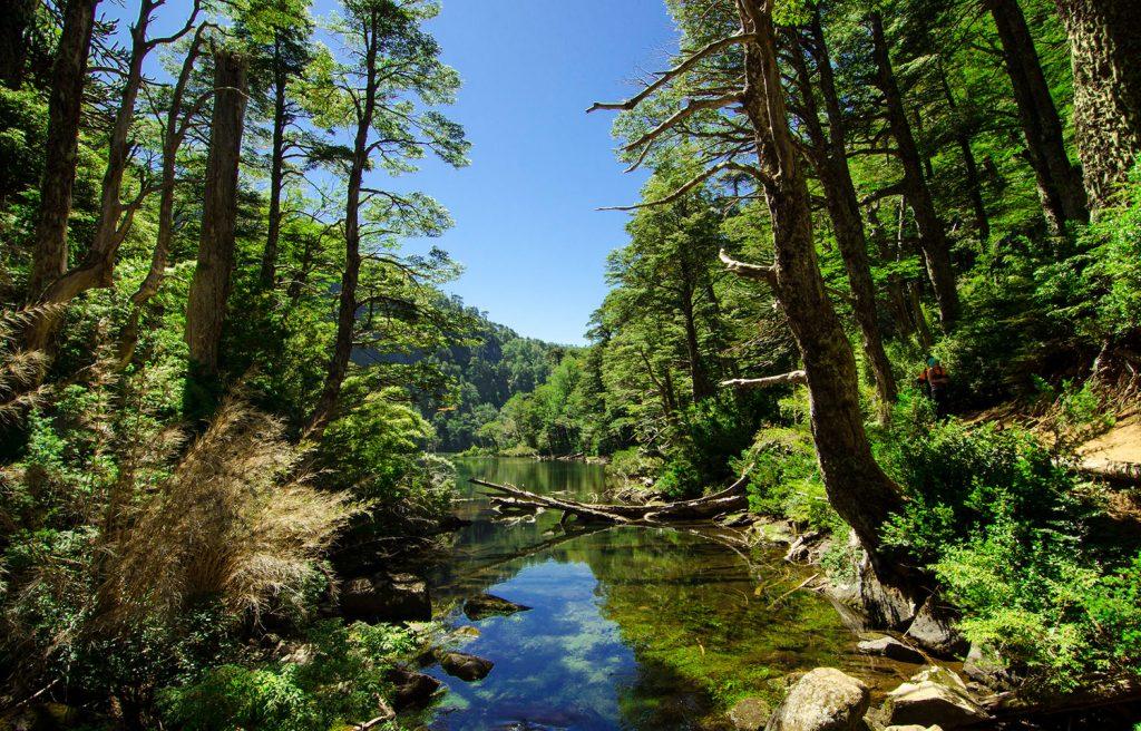 Río en medio de bosque al sur de Chile