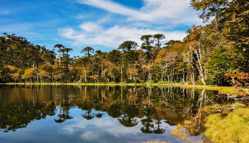 Arboles reflejados en laguna en pucón