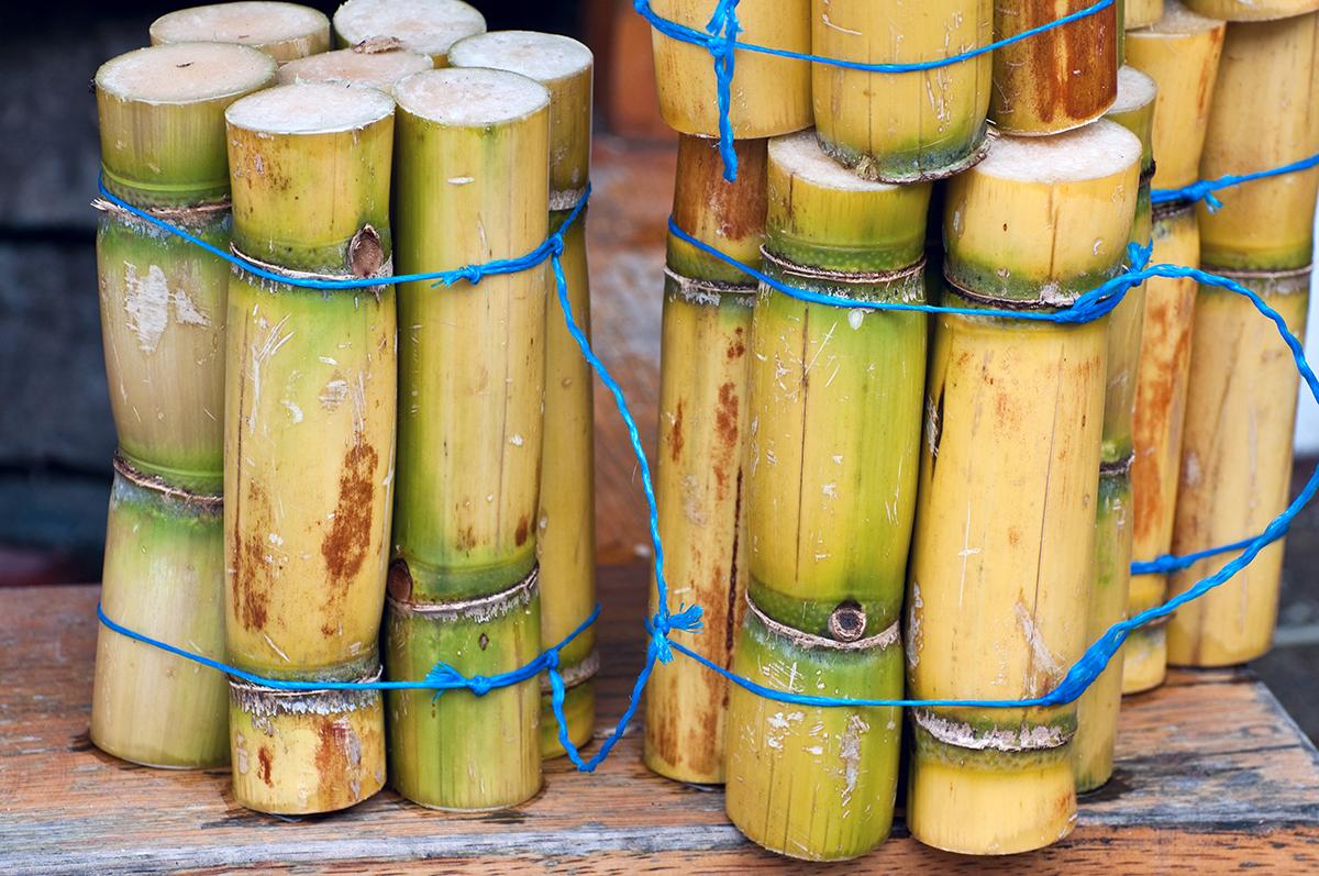 Sugarcane Spirits: Sugarcane