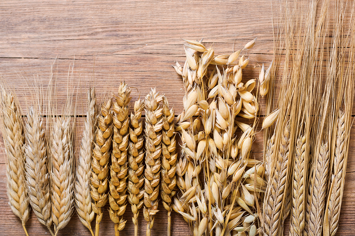 Bourbon Fundamentals: Ears of wheat, rye, barley and oats