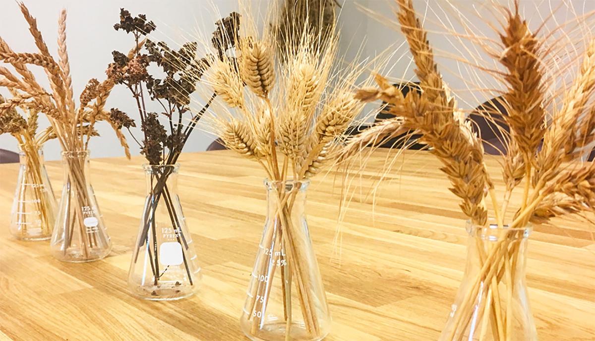 Westland Creates New Barley Research Fellowship
