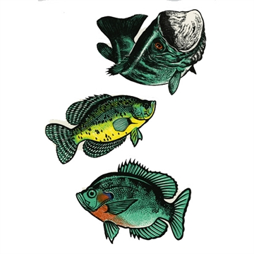 Picture of Dyer Decal Bass Bluegill