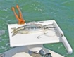 Picture of Fish-N-Drinks Bait Board And Drink Holder Combo For Rod Holders