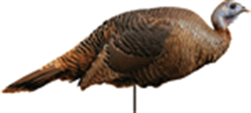 Picture of Montana Decoy CO Decoy Turkey Spring Fling Hen