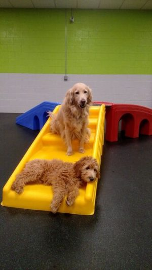 Dogs in Dogtopia Playroom