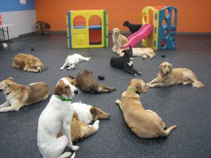Doggies Lying in Playroom
