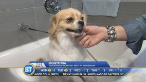 Dogtopia on Breakfast TV Toronto