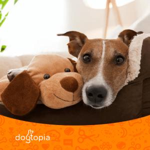 Dog Cuddling with Dog Plush
