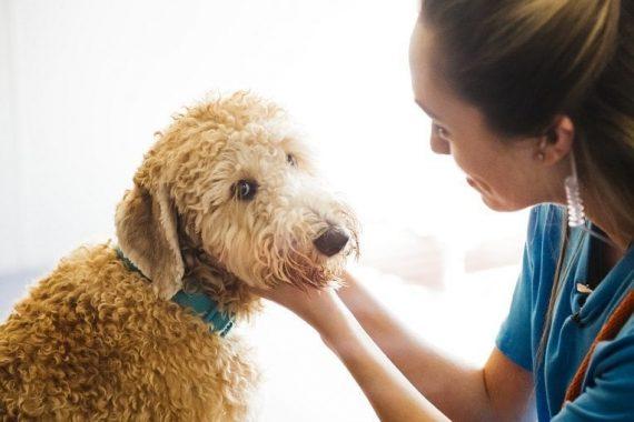 Petting the happy dog