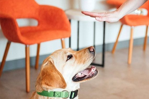 Dogtopia Training Services