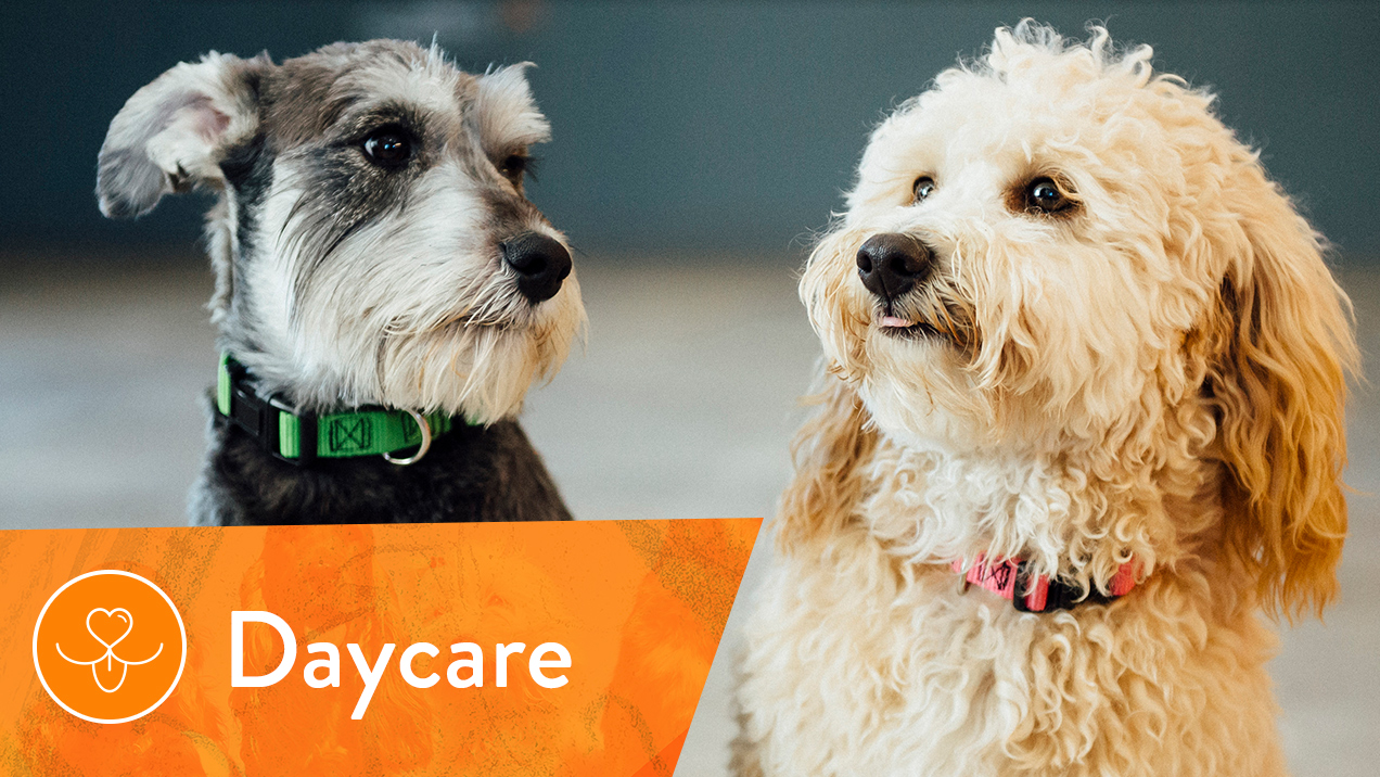 Dog Day Care Orange County