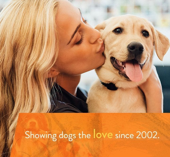Dog daycare dog boarding grooming and spa dogtopia solutioingenieria Choice Image