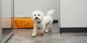 dog health expert