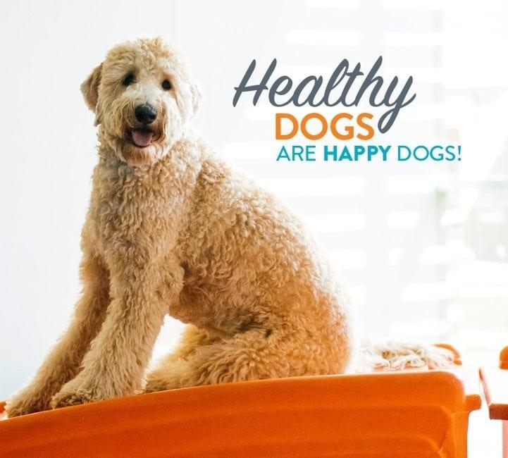 Pup Hub Dog Boarding