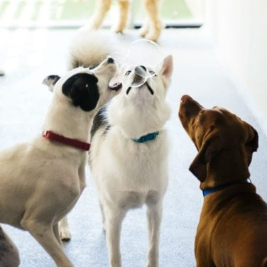 Benefits of dog socialization