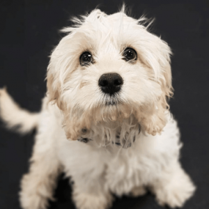 Dogtopia pampers pup to perfections