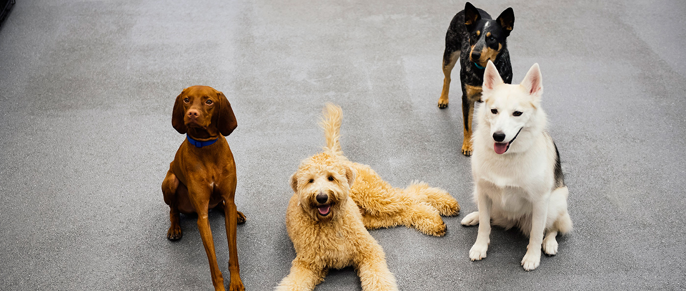 Dog Daycare, Dog Boarding, Grooming & Spa | Dogtopia