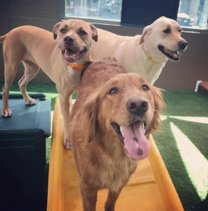 Dogs Getting Exercise at Dogtopia