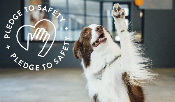 Pledge to Safety Dogtopia
