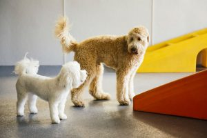 Pups Socializing in Dogtopia Playroom