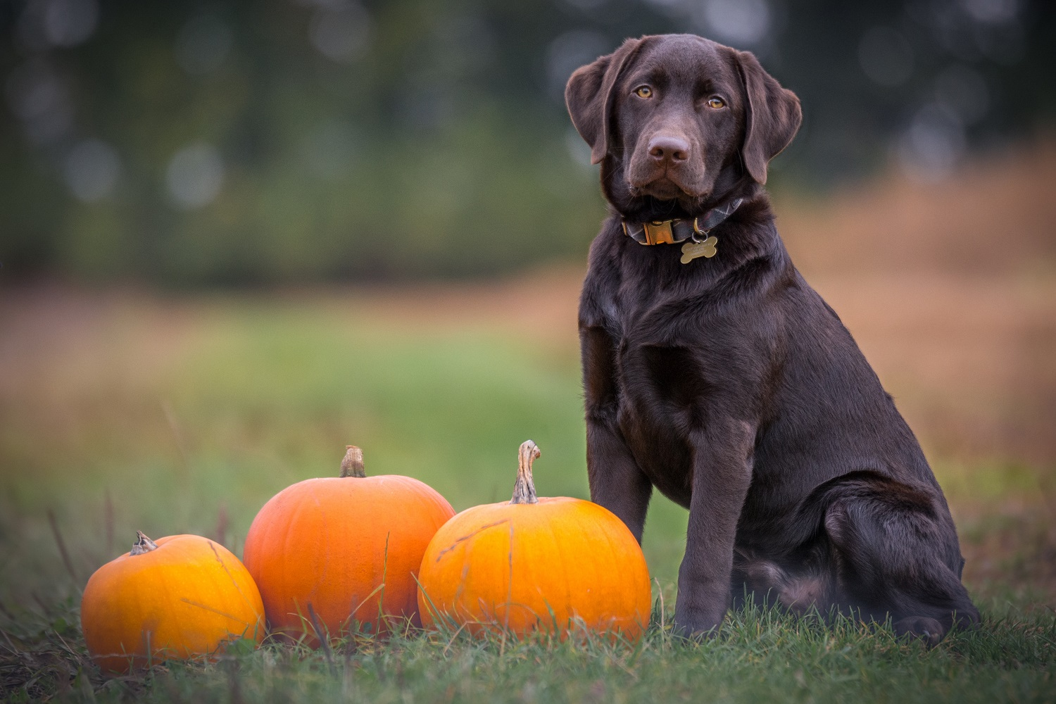 5 Ways to Ensure Your Pup Has a Safe and Happy Thanksgiving