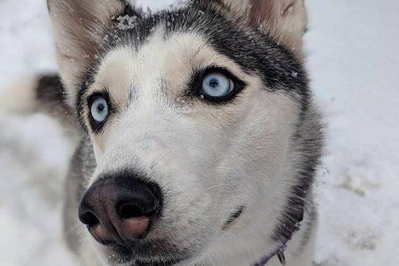 keep-dog-safe-on-winter-walks