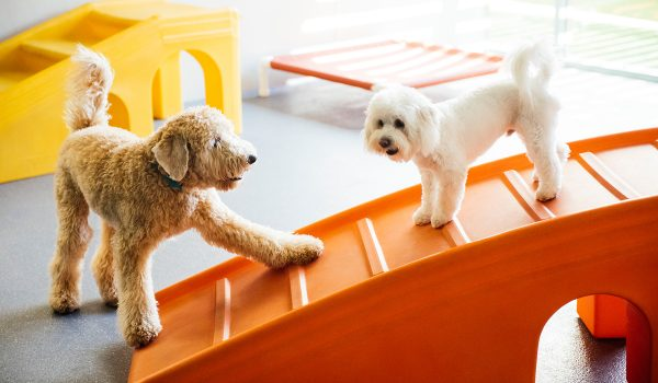 Pups Playing on Dogtopia Slide