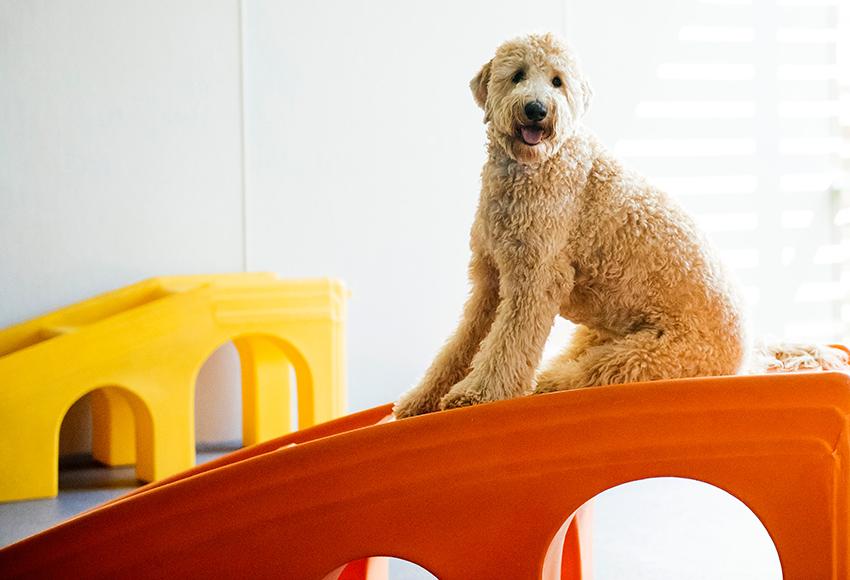 Big Doggie on Slide