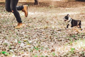 new-year-resolutions-for-your-pet